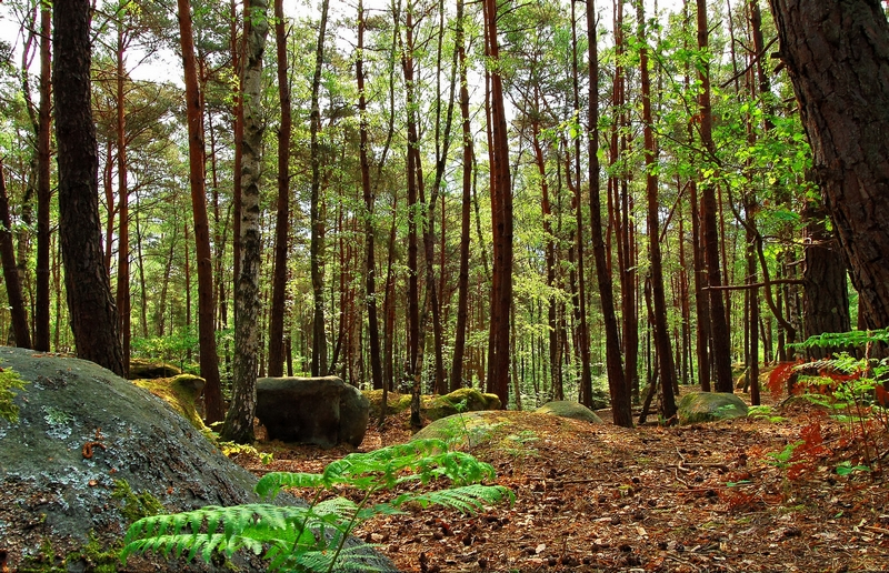 foret fontainebleau small